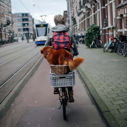 Woman riding a bicycle with a dog and two baskets