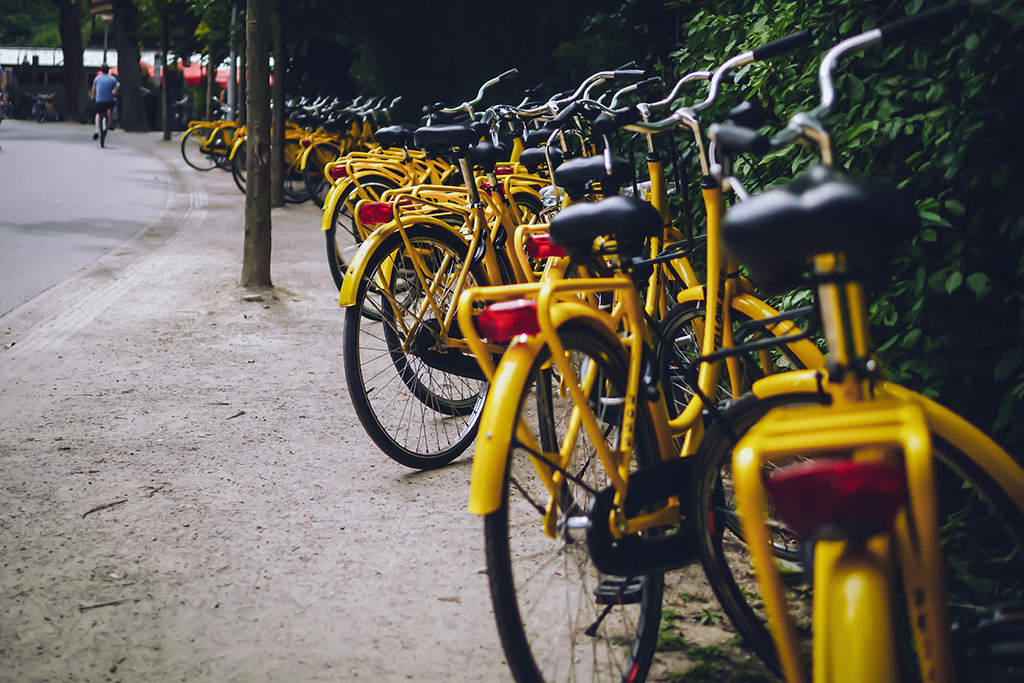 Yellow Bike Farm
