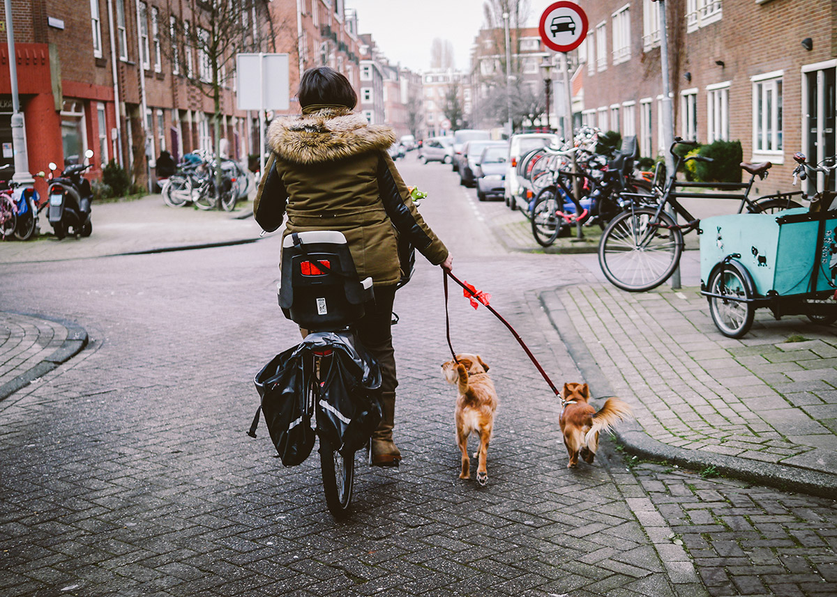 Dog Walker on bike