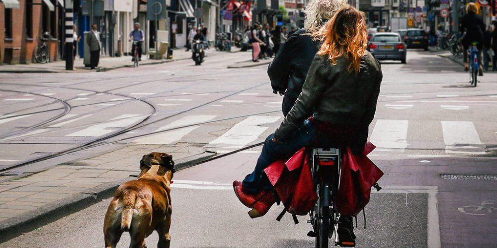 Double ride dogwalker
