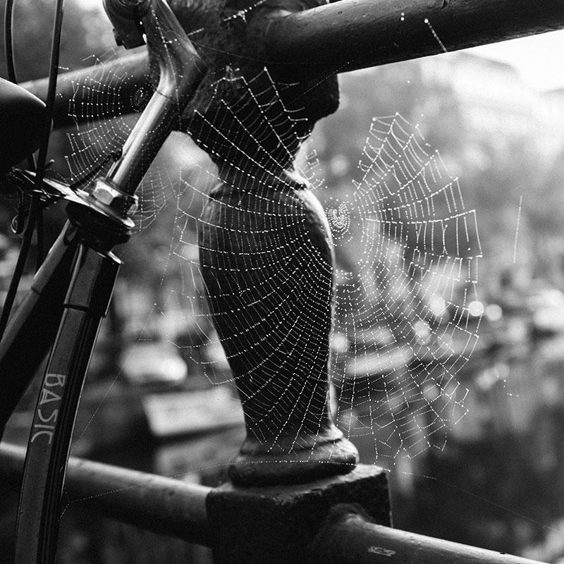 Spider Web Amsterdam