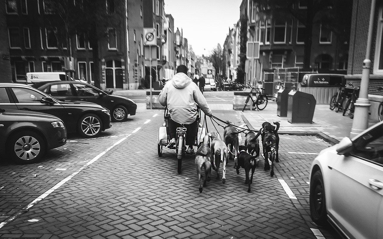 The dog biker