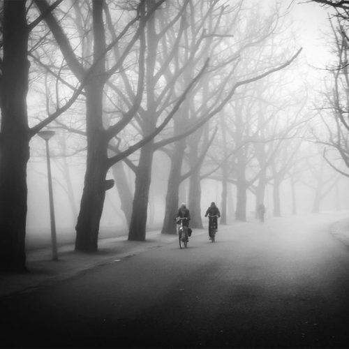 Fog in Vondelpark