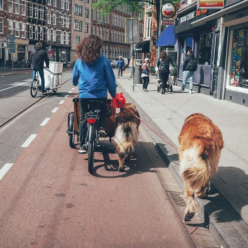 Women riding a bike with dogs