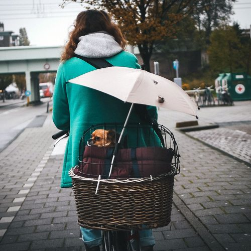 Riding with a dog in a basket with an umbrella.