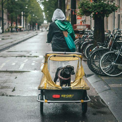 Dog in a bike trailer