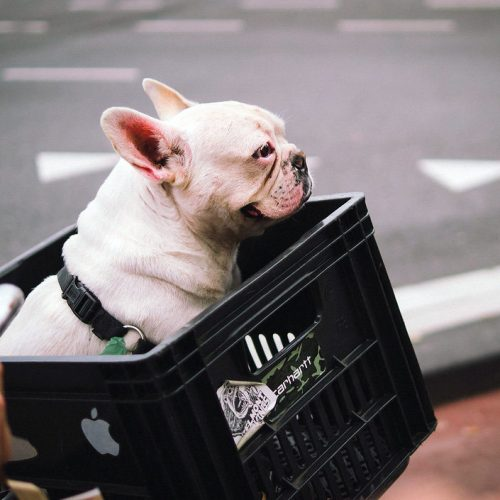 Happy dog riding in basket