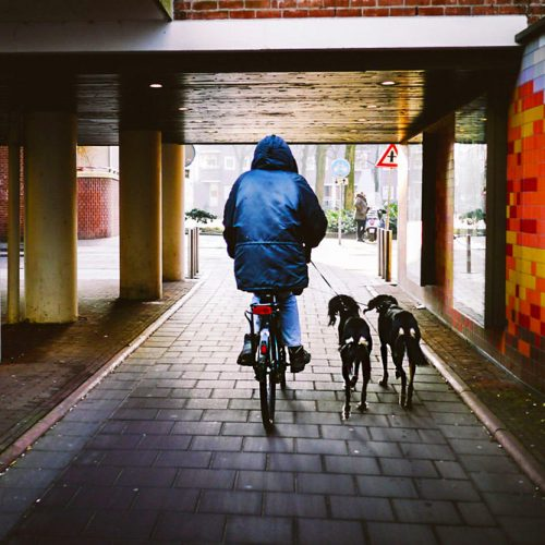 Riding a bike with two dogs