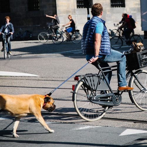Riding a bicycle with two dogs