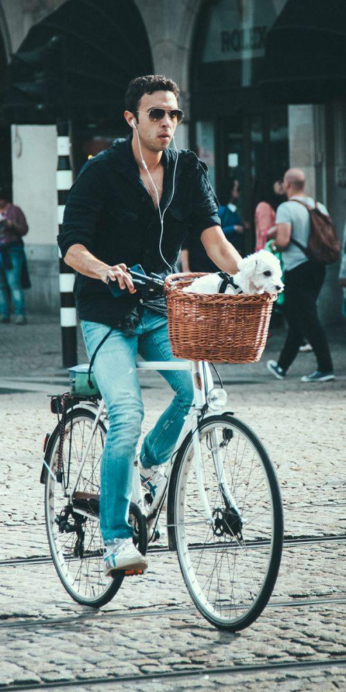 Dogs in bike baskets