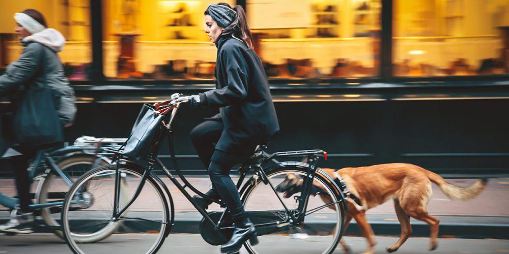 Dogs in Bike trailers