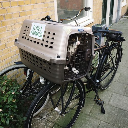Moving a cat on a bike